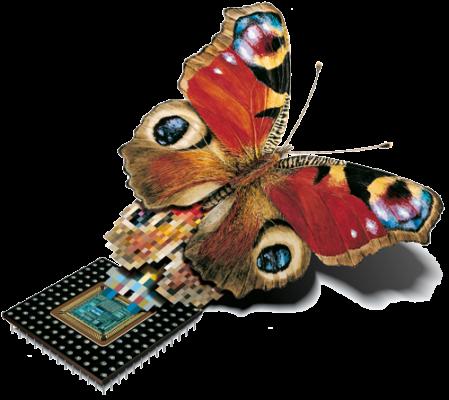 TARASystems_Butterfly_ohneSchrift