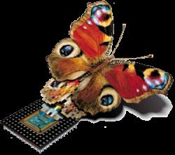 TARASystems_Butterfly_ohneSchrift_trans_XXL